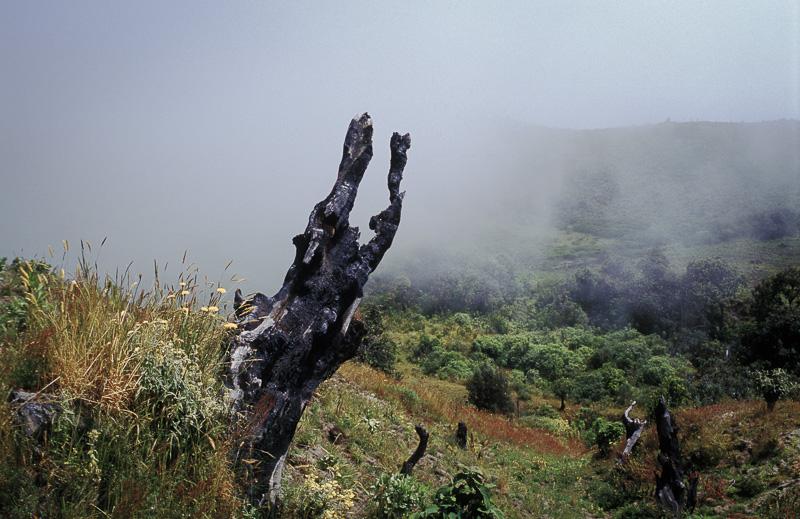 Cloud Forest, Cotopaxi province, Ecuador