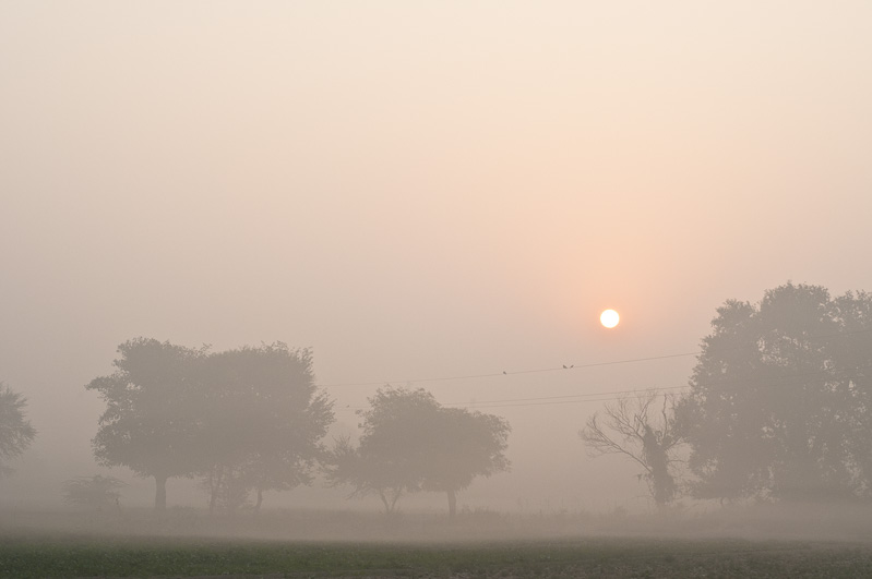 Morning landscape, India