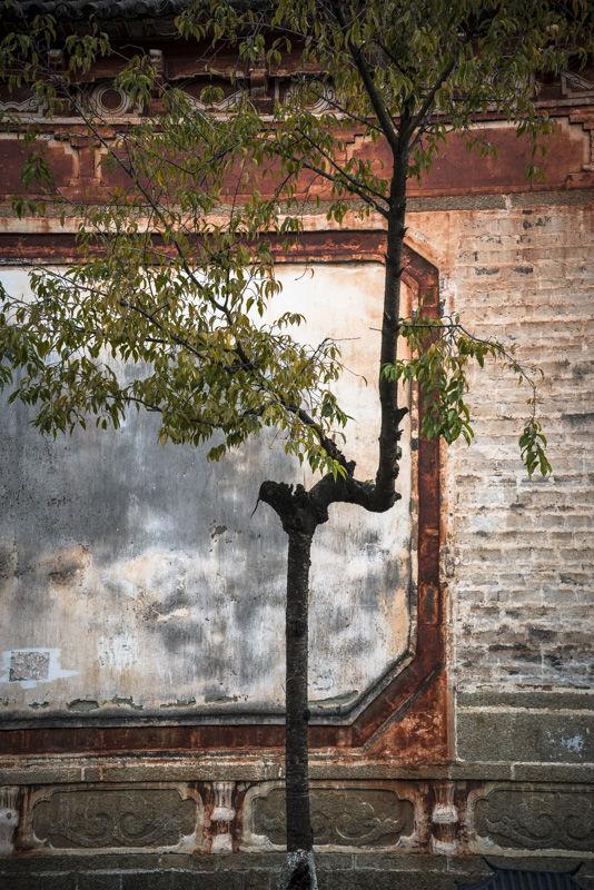 Tree, Dali