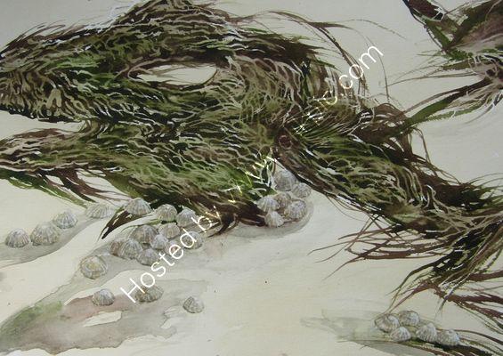 Crooklets Beach Seaweed watercolour