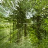 woodland daze