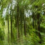 woodland vortex