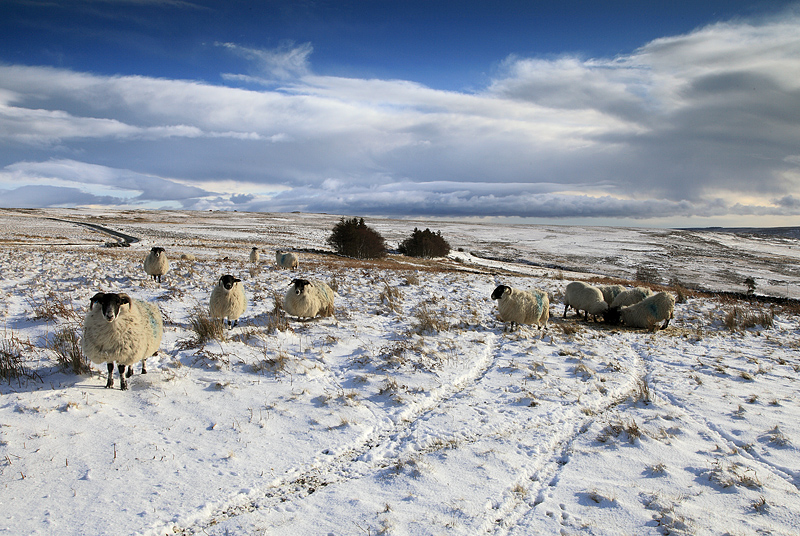 Commondale Winter 1