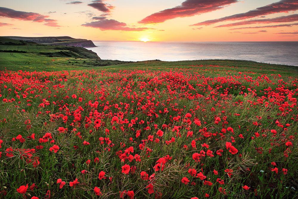 wh 86 Poppy Sunset