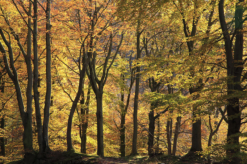 Autumn Grasmere Woods