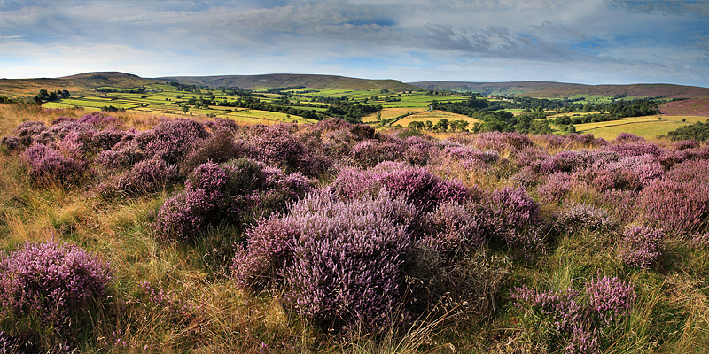 Westerdale Moor