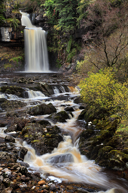 Thornton Force 1