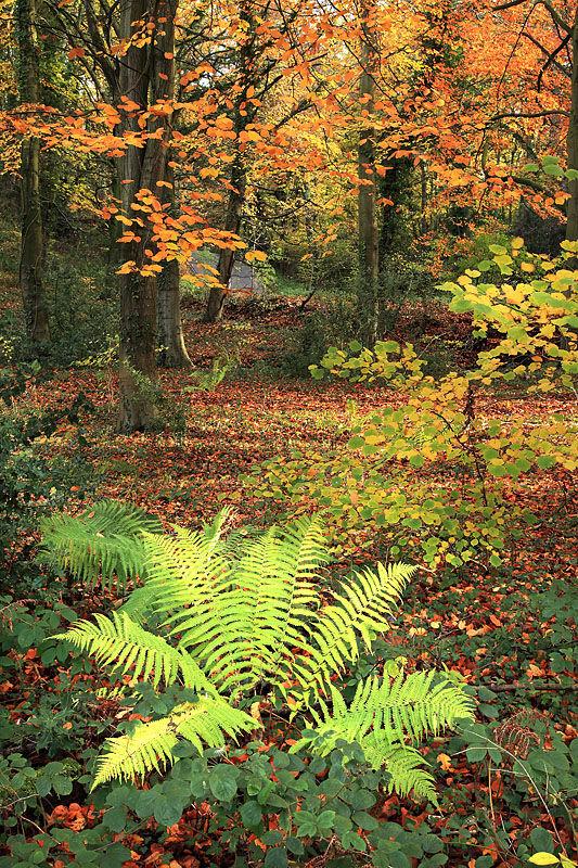 nw 280 Autumn Woods