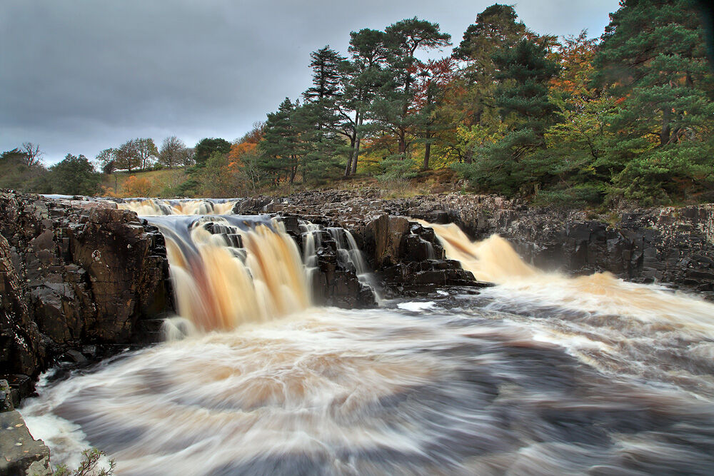 nw 350 Low Force 1