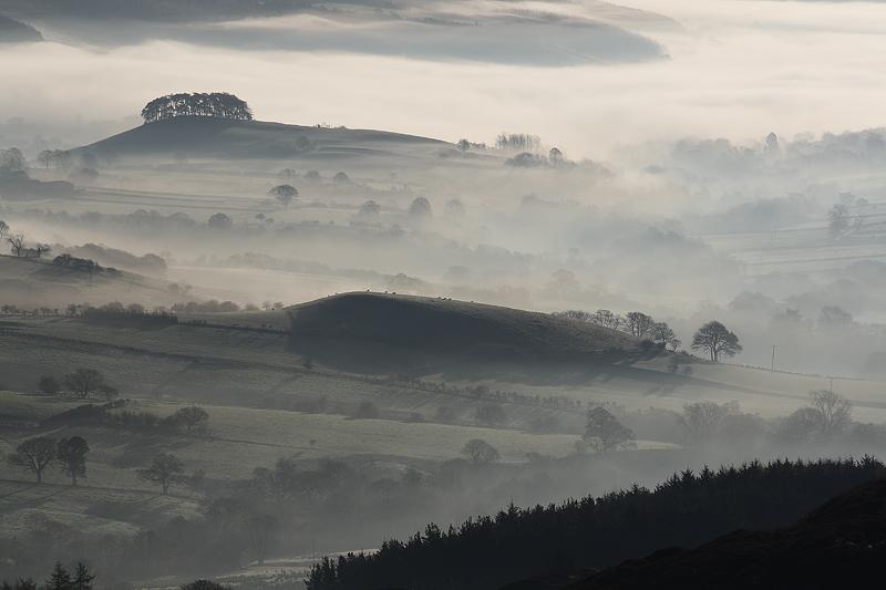 Misty Morn Rosedale 2
