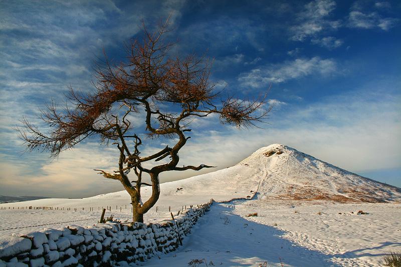 Roseberry Winter Tree 1