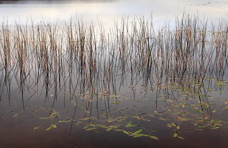 Loch Achray Reeds