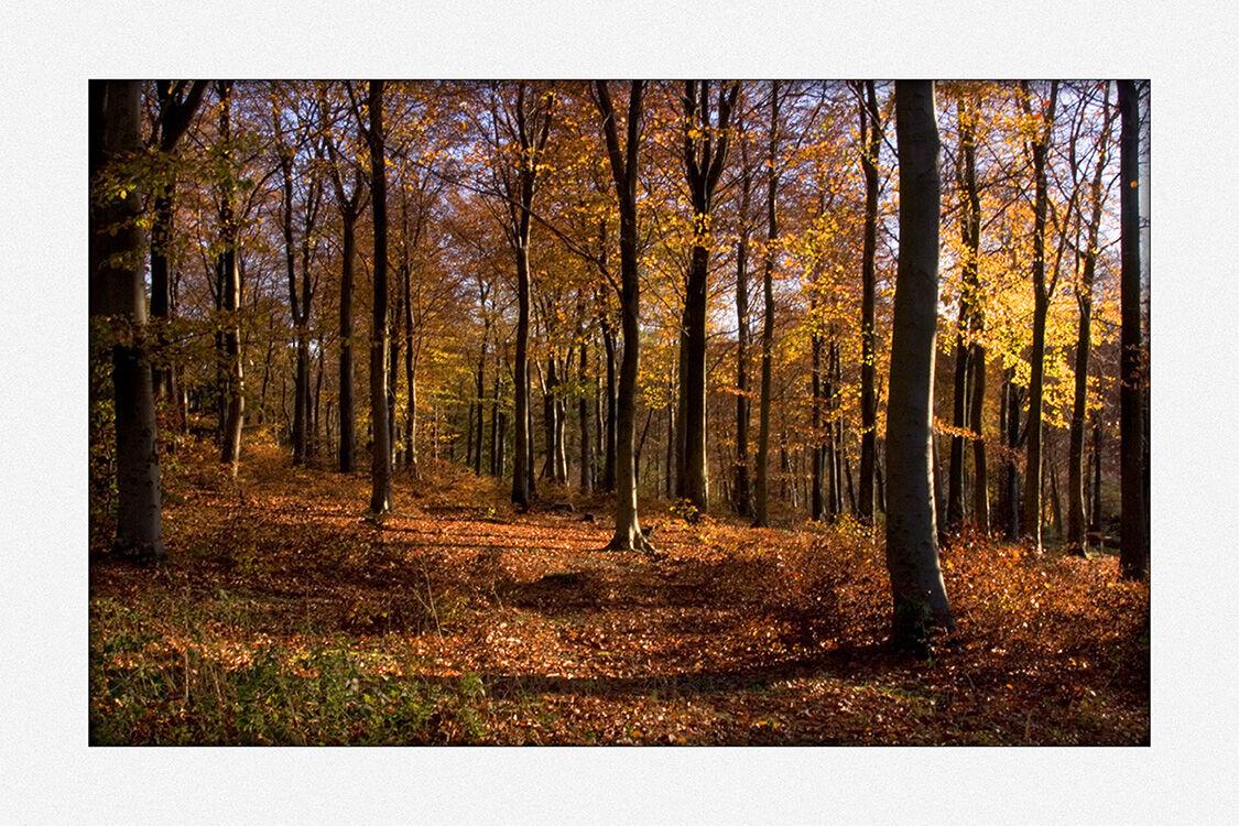 40033 - Autumn