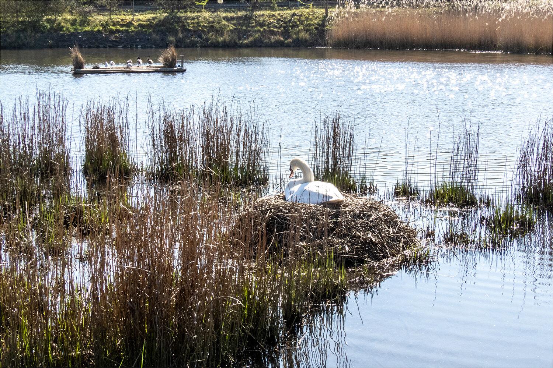 90203 - Swan Nest