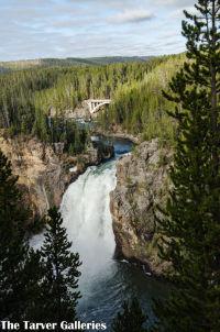 Yellowstone Falls