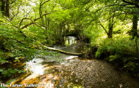 River at Rosedale Abbey, North Yorkshire