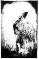 Dark Hare
