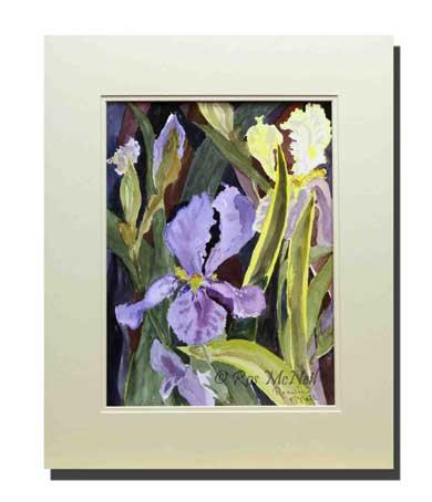 Irises-at-Glebe-Cottage
