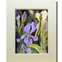 Irises-at-Glebe-Cottage