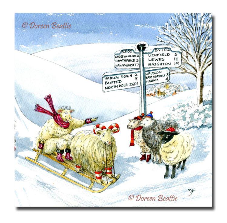 Sledging Sheep at Possingworth Lane