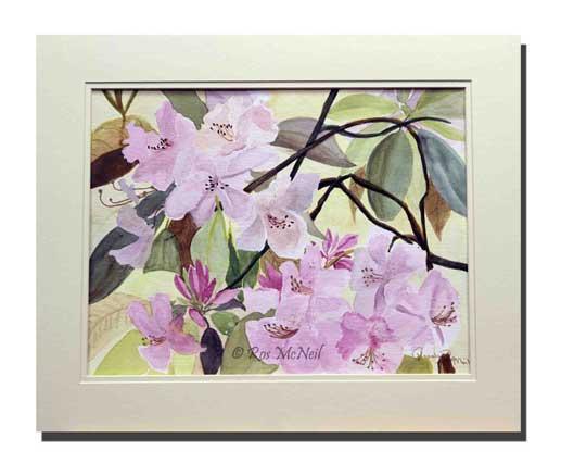 Rhododendroms-at-Glebe-Cott