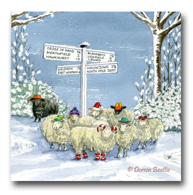 Lost Sheep at Warren Lane