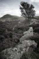 Lone Tree 2