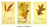 Leaf-triptycht-web-site