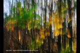 autumn colours abstract