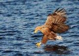 sea eagle 5