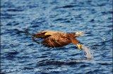 sea eagle 6