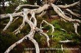 broken branch 2021