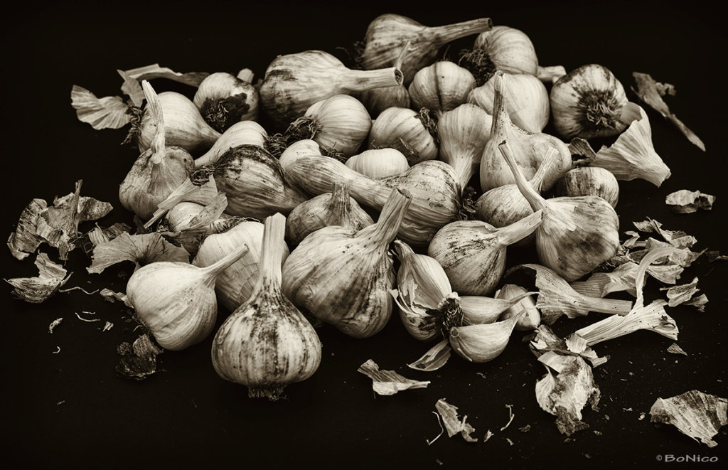 Harvest of garlic