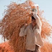 Desert Bush Collector