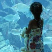 Little Girl and Aquarium