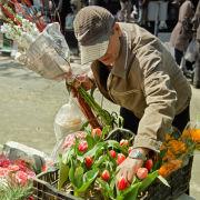 Flower for Nowruz