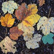 Leaves On Asphalt