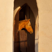 Brown Horse and Sunlit Arches