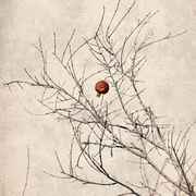 Lonely Pomegranate