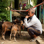 Man with Goats