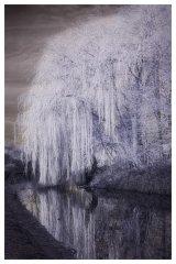 Canal Willow IR 01 soft