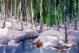 Winter birches, Karelia