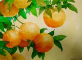 Sunshine oranges