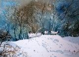 snow bound sheep