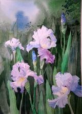 Iris SOLD