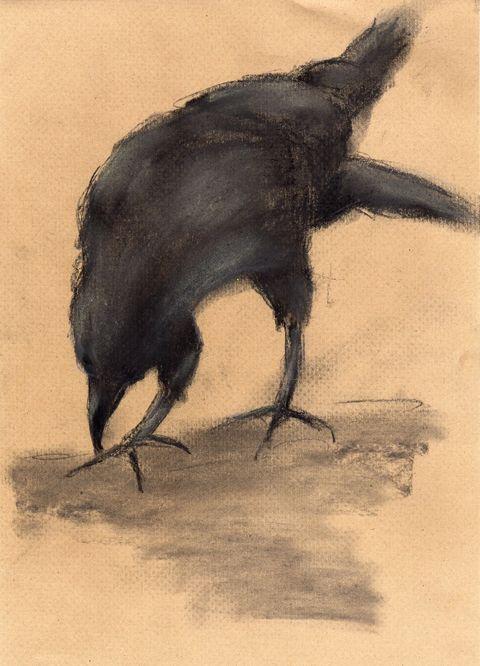 the bird sketch