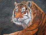 sib tiger