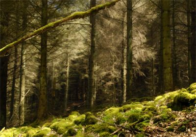 Ladybower woodland