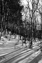 Among Birch