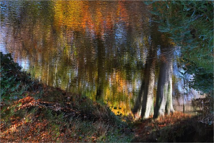 Autumn reflections at Minnowburn